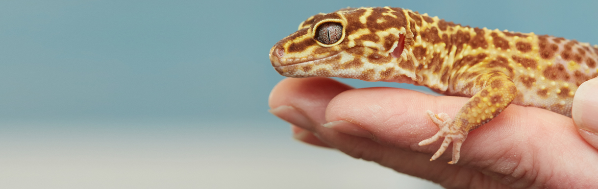 Free health checks for exotic pets